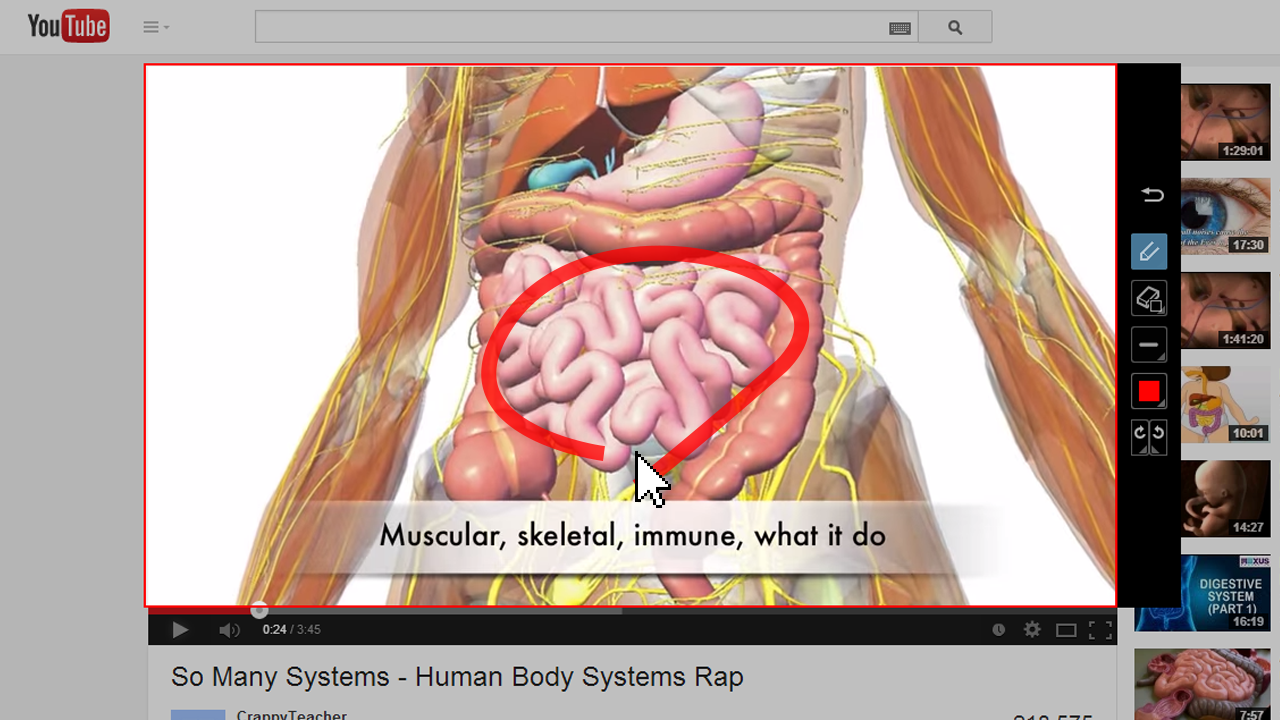 muscular skeletal human body systems